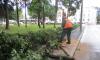 В Петербурге во время шторма повалило почти 200 деревьев