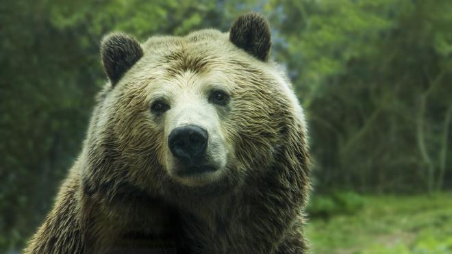 В Забайкалье медведь растерзал женщину