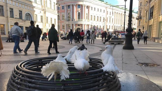 Что произошло в Петербурге 16 апреля: главные новости дня