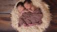 Счастье оптом: Петербурженка родила четверню