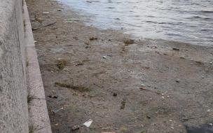 В Смольном рассказали, как часто чистят водоемы от мусора и тины