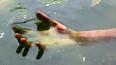 Исцарапанный труп петербуржца найден у реки Оккервиль