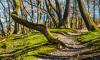 В субботу в лесах Петербурга посадят 900 деревьев