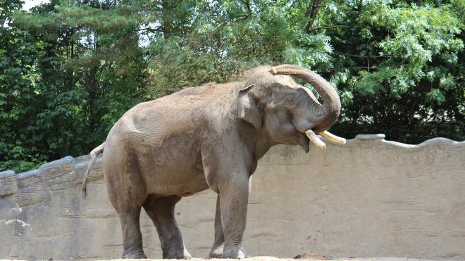 В Таиланде дикие слоны остановили и ограбили грузовики с фруктами
