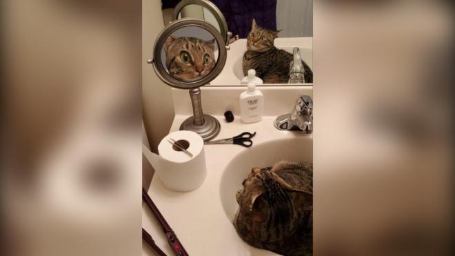Фото удивленной кошки рассмешило пользователей Reddit