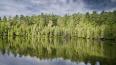 Во Всеволожском районе вырубят 82 гектара ельника