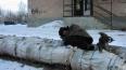 Петербургский бомж умер в Александровской больнице ...