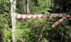 Части человеческого скелета нашли петербуржцы во время лесной прогулки