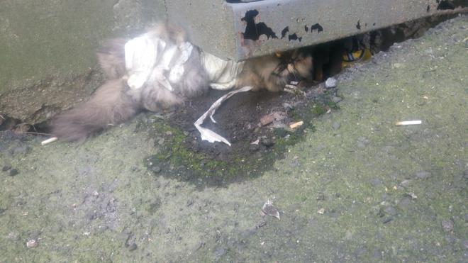 Жуткие фото: на Васильевском острове зоофил изнасиловал кошку