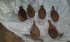 Из Репино вывезли 6 гранат времен Великой Отечественной войны