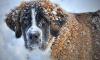В Купчино догхантеры отравили двух домашних собак