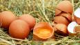 Эксперты дали рекомендации по выбору куриных яиц