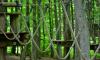 В Петербурге построят два веревочных парка