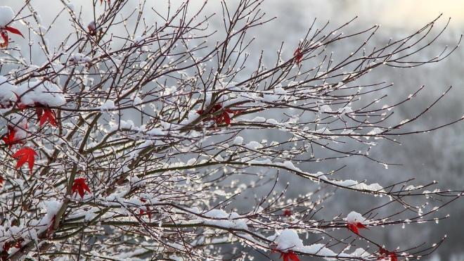 В пятницу в Петербурге ожидается минус и небольшой снег