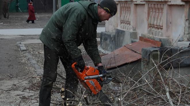 Депутат Госдумы просит проверить законность вырубки деревьев на Шлиссельбургском шоссе