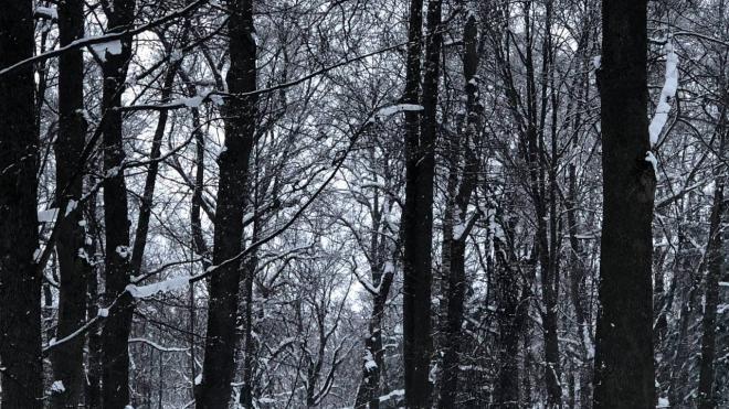 Петербуржцев предупредили о снеге и облачной погоде в субботу