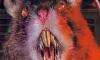 По вине коммунальщиков в зоомагазине декоративные крысы сварились в кипятке