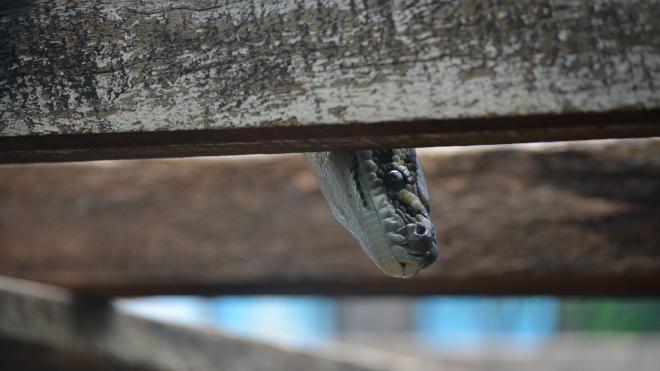 Укушенная змеёй в Ленобласти школьница угодила в реанимацию