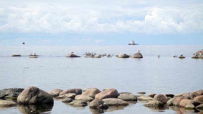 На берегу Финского залива нашли труп
