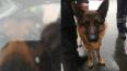 Стало известно, как жители Петербурга спасали собак ...