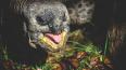 В Австрии 120-летние черепашки возненавидели друг ...