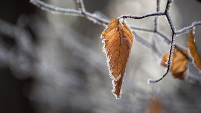 В субботу в Ленобласти ожидается мокрый снег