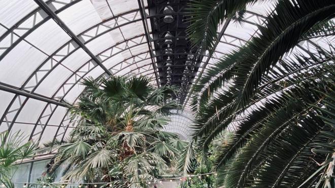 Оранжереи Таврического сада реконструируют к июлю 2025 года