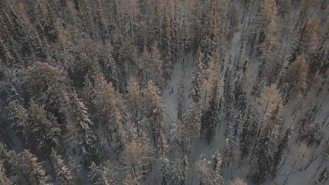 Почти все городские леса в Петербурге находятся под видеонаблюдением
