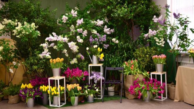 Ботанический сад приглашает на выставку сирени и тюльпанов