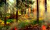 Количество лесных пожаров в Ленобласти увеличилось в четыре раза