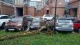 Штормовой ветер повалил деревья в нескольких районах ...