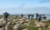 Любители туризма отправятся в экологический маршрут вдоль Финского залива