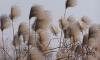 В Петербурге 20 января ожидается усиление ветра порывами до 17 м/с