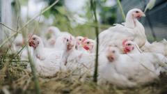 В России предложили заморозить отпускные цены на птицу и яйца