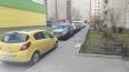 На улице Щербакова алкаш выбросил из окна свою собаку