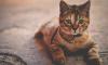 В Кингисеппском районе волонтеры-спасатели вызволили кошку из-под земли
