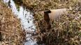 В канаве в Мурино нашли труп 68-летней женщины