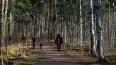 Экологическая комиссия проведет исследование в Пискаревс ...
