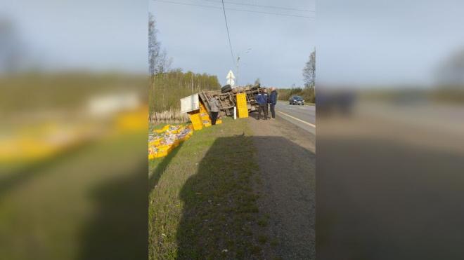 Грузовик растерял хлеб на Мурманском шоссе в Ленобласти