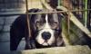 В Ленобласти собака откопала в мусоре череп и кости убитого нелегала