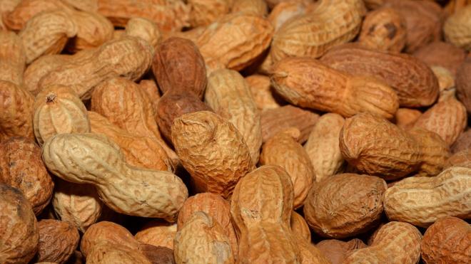 В Петербург из Бразилии прибыл арахис с личинками