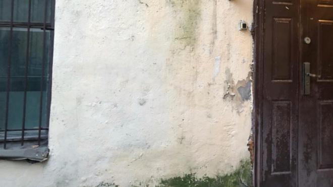 Прокуратура нашла на Обводном канале дом, заросший мхом