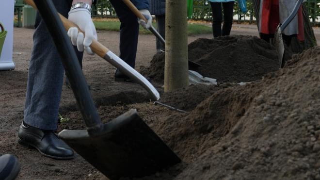 Для весеннего оформления Петербурга высадят около 33 тыс. многолетних растений
