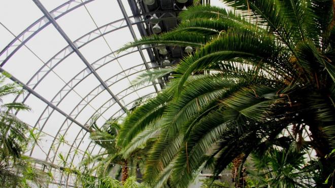 В оранжерею Таврического сада пообещали вернуть тепло после прорыва трубы