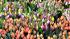 В Китае возобновил работу крупнейший в Азии рынок цветов