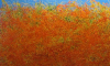 Выставка «Вдоль Великого Шелкового пути»