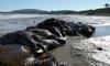 Несколько сотен мертвых пингвинов выбросило на пляжи Бразилии