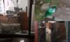 Неизвестные попытались поджечь офис ФАНа в Петербурге