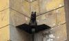На субботнике в Петербурге помоют кошек