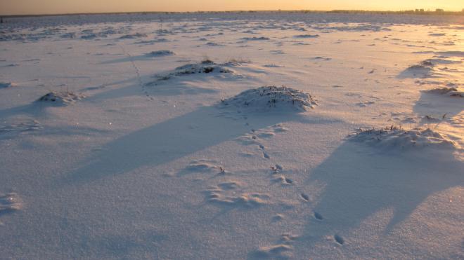 По следу дикого зверя: как в Петербурге проходил зимний мониторинг фауны